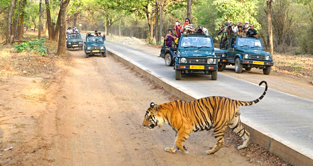 North India with National Park