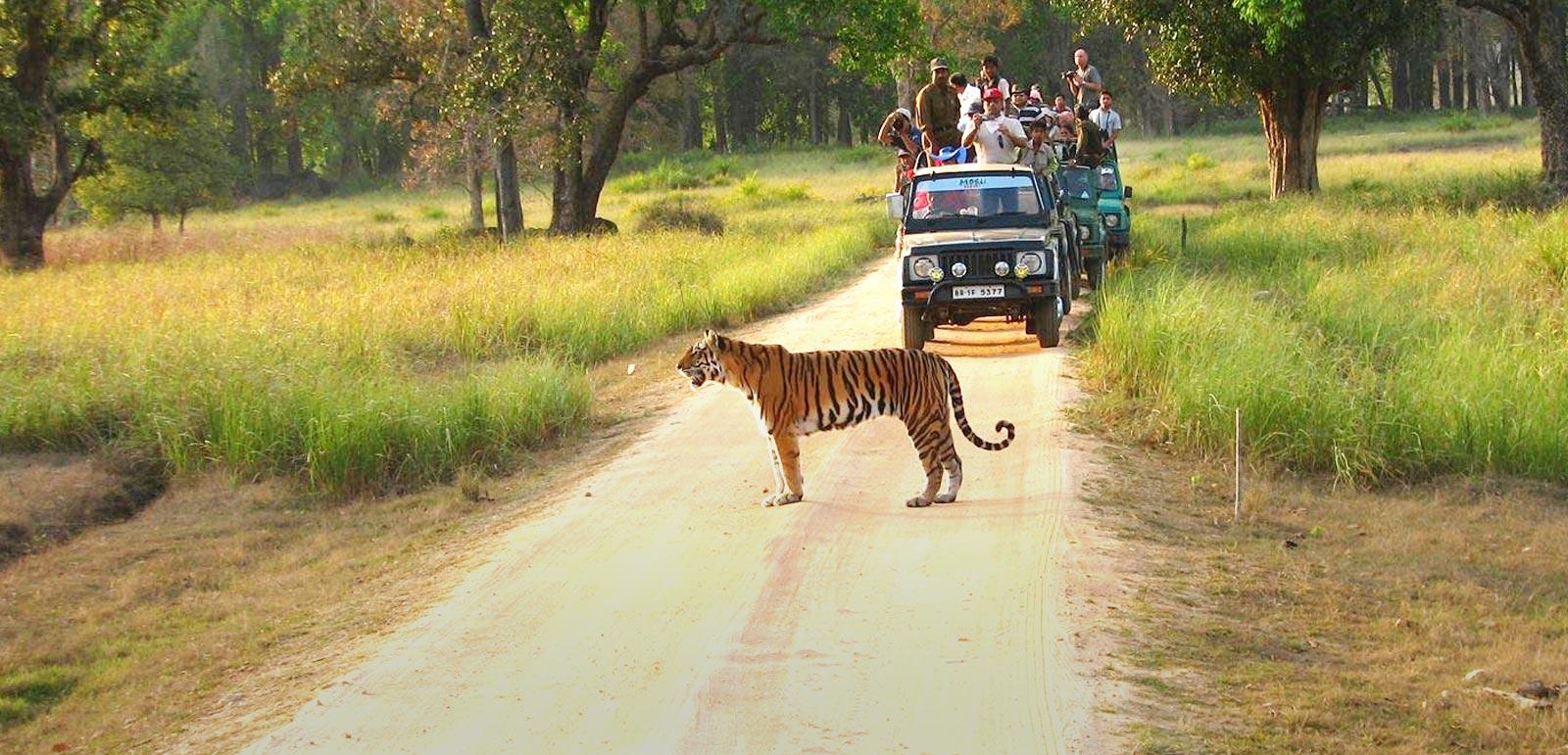 Jeep Safari in Tadoba National Park